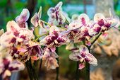 stock photo of orquidea  - A beautiful orchid in the room interior - JPG