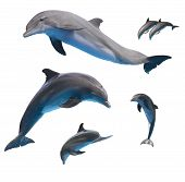 stock photo of bottlenose dolphin  - set of jumping dolphins isolated on white background - JPG