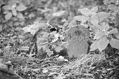 pic of obituary  - An old gravestone in the cemetery black and white - JPG
