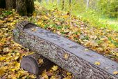 image of banquette  - Photo of a bench with orange leaves in the park. Nature photography.