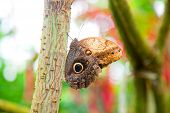 stock photo of boomerang  - Closep on Boomerang Owl butterfly in colorful natural environment - JPG