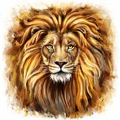 foto of african lion  - lion head - JPG