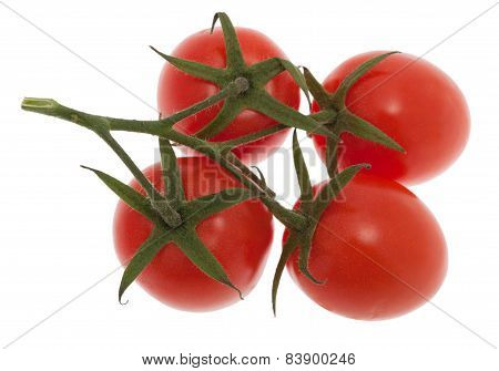 Tomatoes With Panicle