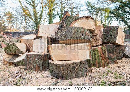 Big oak tree trunks in parts