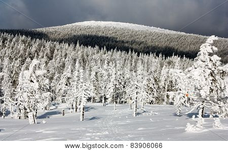 Wintry View Of Snowy Forest On Mountain