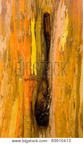 Detail Of Colorful Bark Of Rainbow Eucalyptus Tree