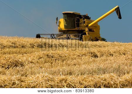 Yellow Harvester