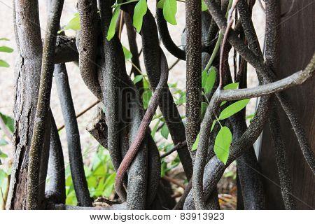 twisty tree background