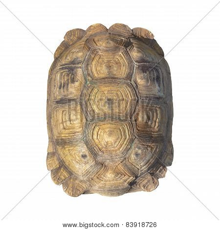 Tortoise Shell Brown Color From Giant Turtle On White Background, Closeup