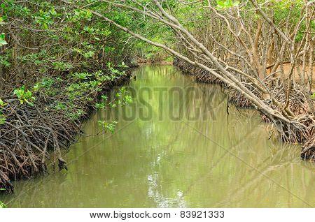 Mangrove Forest in Vietnam