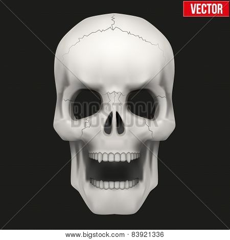 Vector Human skull with open mouth.