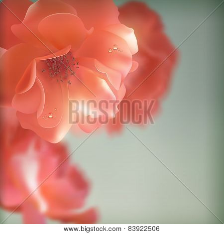 Shining vector flowers roses
