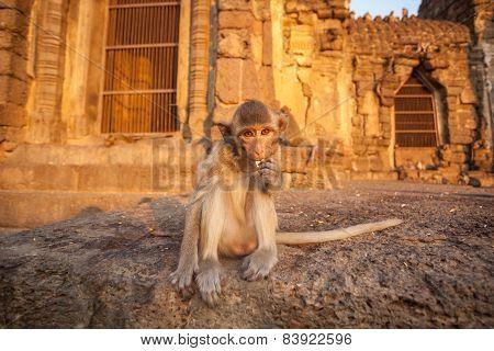 Baby Monkeys In Thai Temple