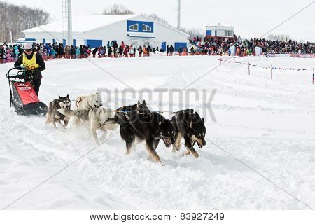 Kamchatka Sled Dog Racing Beringia