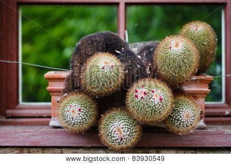 Cactus In A Cactus Pot