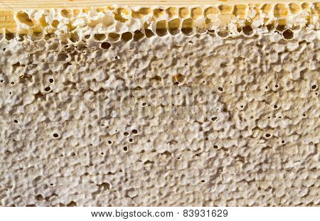 Sealed Honey Comb