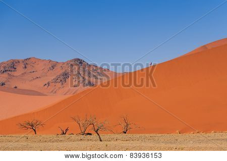 Sand Dune Dead Trees People Climbing Namibia