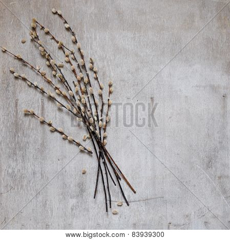 Pussy-willow Flowers On A Vintage Wood Background
