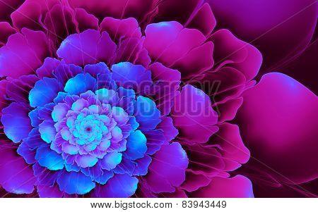Cyan-pink Flower
