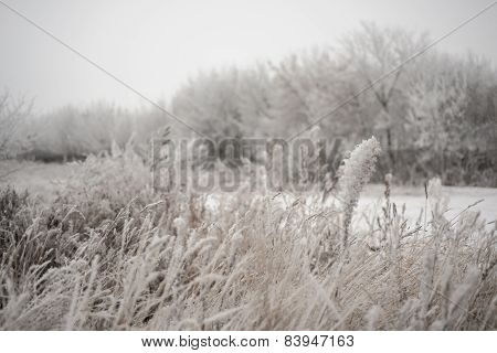 Winter And Field