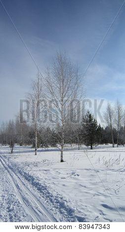 Frosty grove