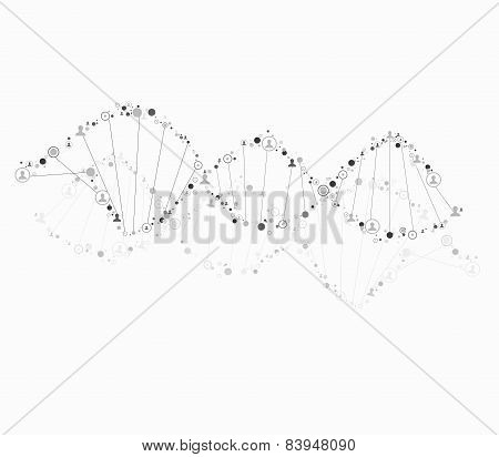 DNA spiral consist of human