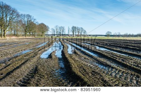 Tire Tracks And Puddles In Belgian Farmland.