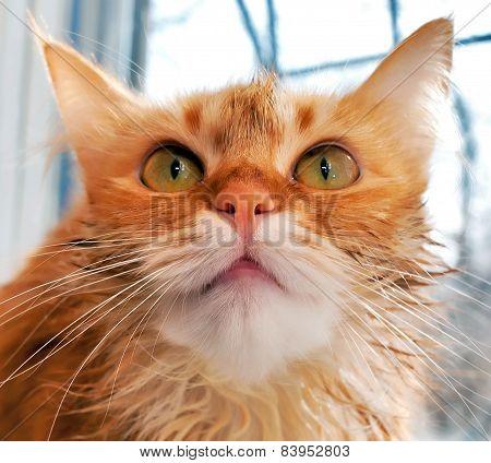 Muzzle Cat