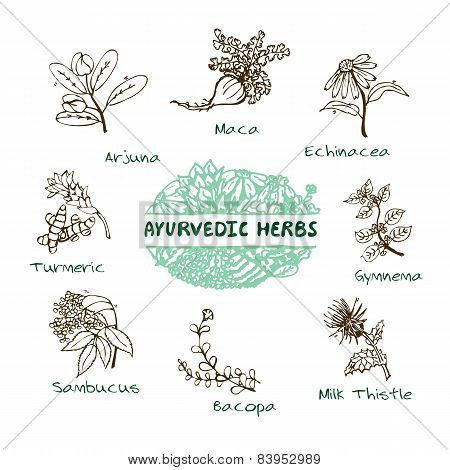 Ayurvedic herbs collection