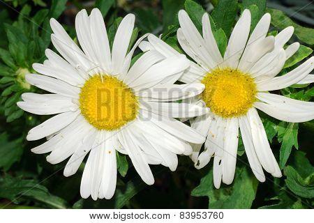 Flower Gear