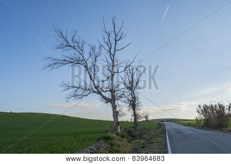 Dead Trees On The Edge Of A Road
