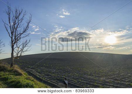Plowed Field In A Sunset