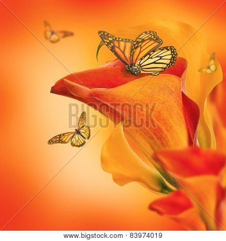 Bright buds callas and butterfly, floral background
