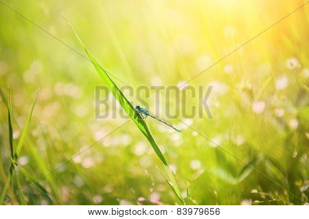 Small Dragonfly On The Green Grass In The Field