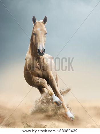 Akhal-teke Horse In Desert