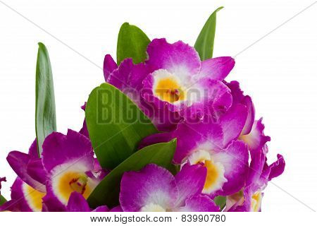 Pink Dendrobium Orchid Flowers On A White Background