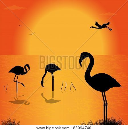 flamingos on the lake in the sunset