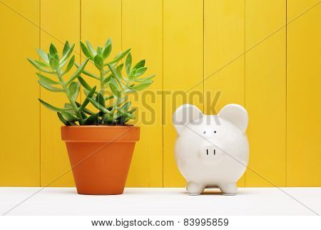 Piggy Bank Beside Small Plant On A Pot