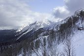 pic of rosa  - Rosa Khutor Alpine Ski Resort in Sochi - JPG