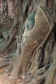 stock photo of budha  - Head of Buddha statue in the tree roots at Wat Mahathat Ayutthaya Thailand - JPG