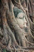 image of budha  - Head of Buddha statue in the tree roots at Wat Mahathat Ayutthaya Thailand - JPG
