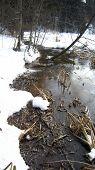 stock photo of boggy  - Winter non - JPG