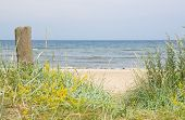 stock photo of vegetation  - Sandy beach and vegetation yellow flowers by the Baltic sea in Ahus Sweden - JPG