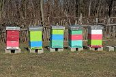 stock photo of bee-hive  - Bee hive on the field - JPG