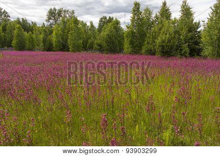 Smolka Meadow Flowers Grow On Large Meadow