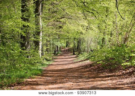 Scenic Forest Dirt Path In Spring  With Green Trees