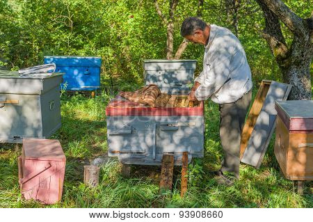 Bee-keeper doing examination of his bee families