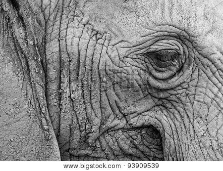 Elephant in profile
