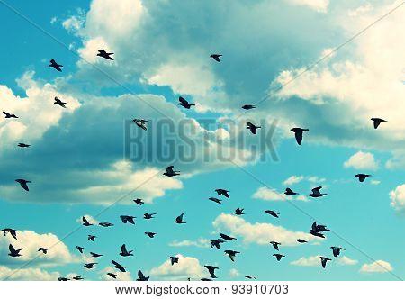 Birds flying in the blue sky.