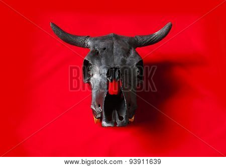 Black Bulls Skull